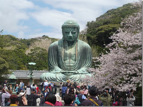 鎌倉 牡丹 桜 060