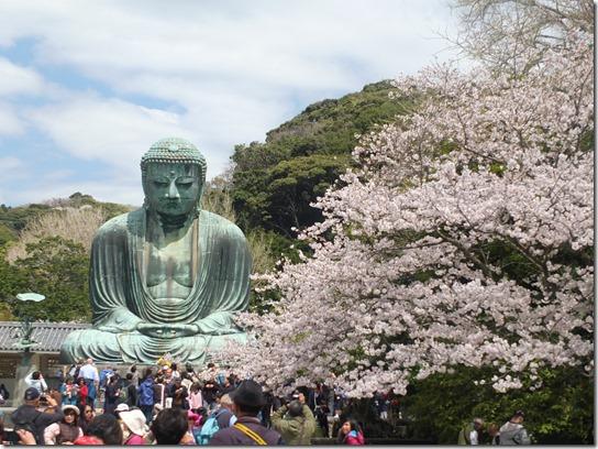 鎌倉 牡丹 桜 061