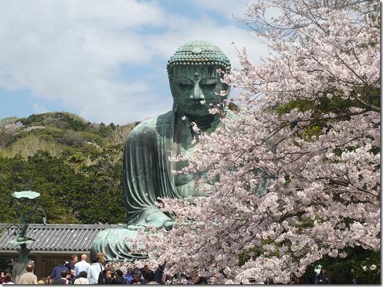 鎌倉 牡丹 桜 063