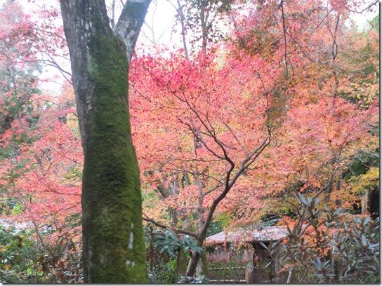 2016京都紅葉 064