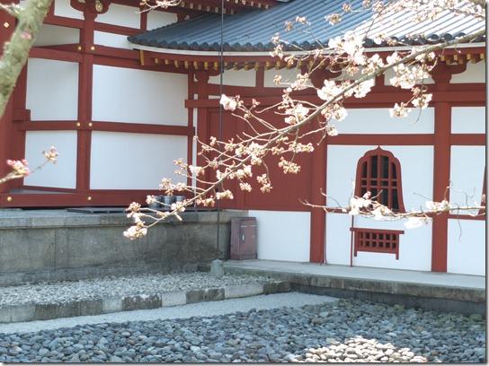 2017京都桜 067