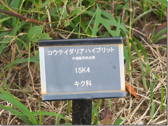 コスモス 昭和記念 069