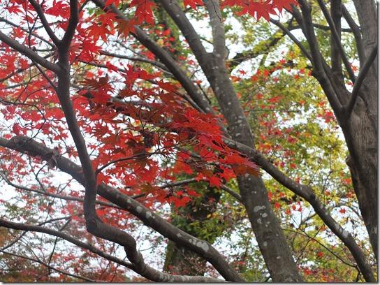 2016京都紅葉 075