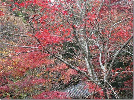 2016京都紅葉 077