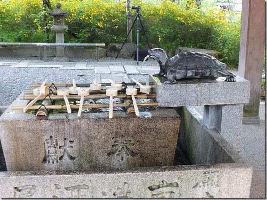 牡丹 関西 2017 078