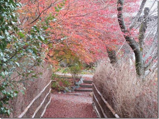 2016京都紅葉 082
