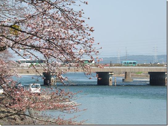 2017京都桜 085