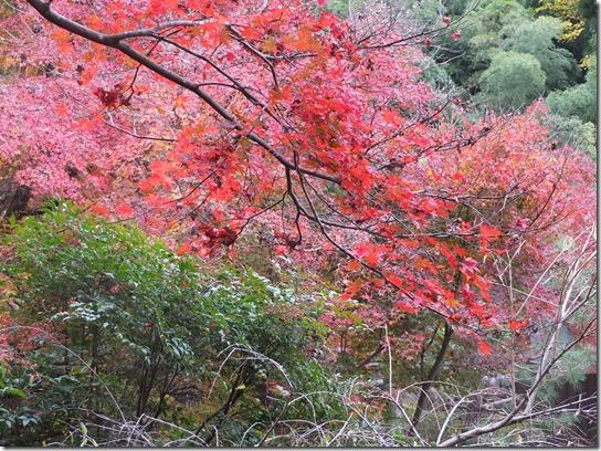 2016京都紅葉 089
