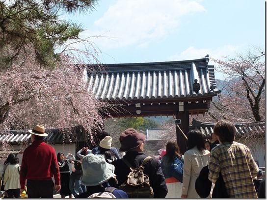 2017京都桜 092