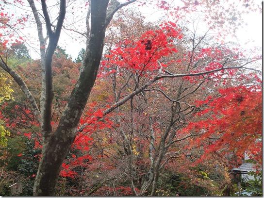 2016京都紅葉 094