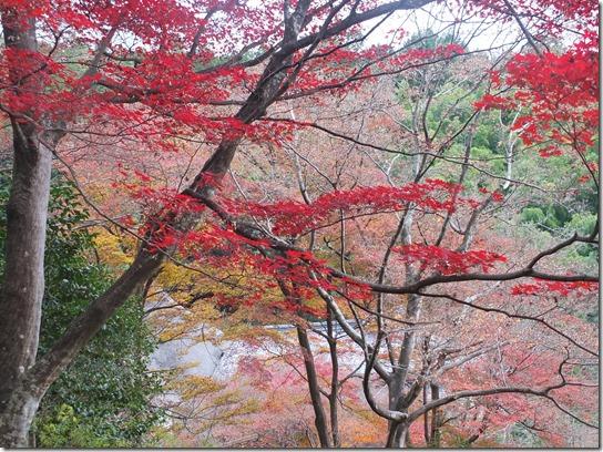 2016京都紅葉 096