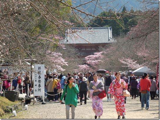 2017京都桜 098