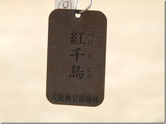 2017 関西 梅 100