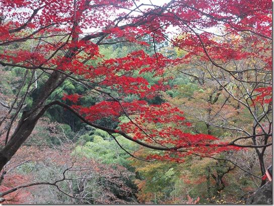 2016京都紅葉 100