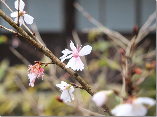 大阪 鎌倉 東京 107