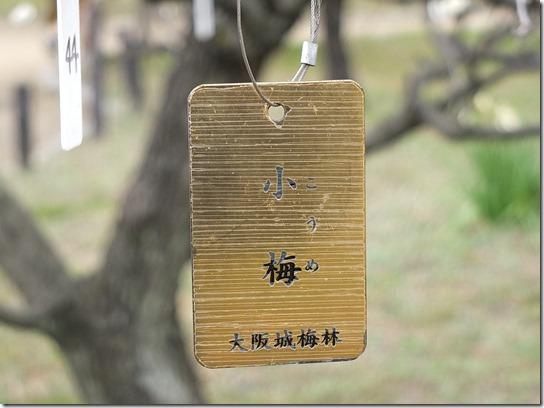 2017 関西 梅 107
