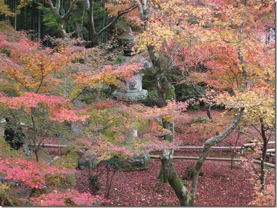 2016京都紅葉 116