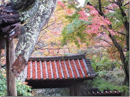 大阪 鎌倉 東京 118