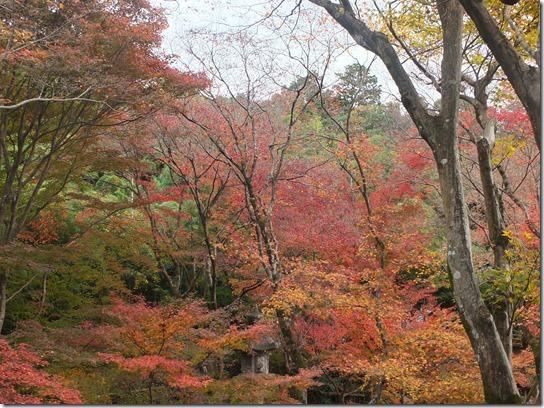 2016京都紅葉 119