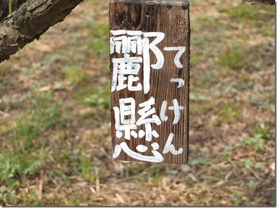 2017 関西 梅 122