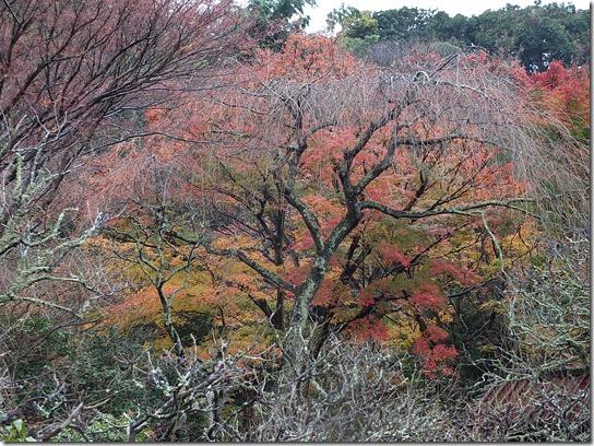 大阪 鎌倉 東京 124