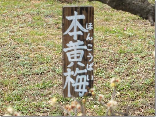 2017 関西 梅 131