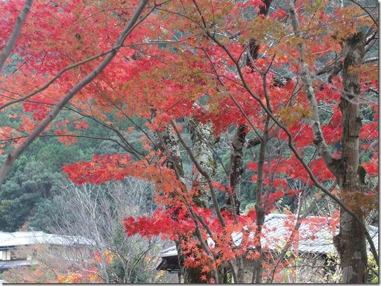 2016京都紅葉 136