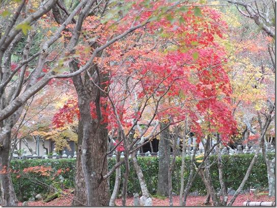 2016京都紅葉 143