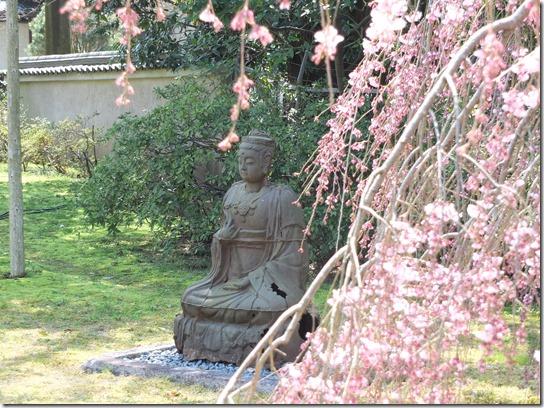 2017京都桜 148