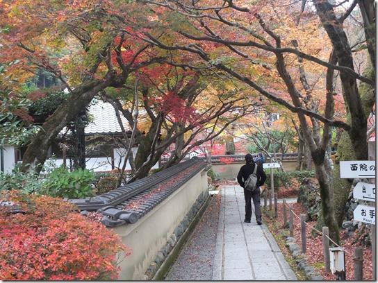 2016京都紅葉 157