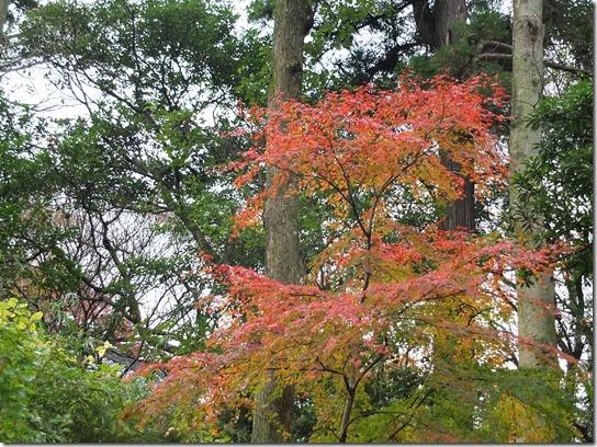 大阪 鎌倉 東京 158