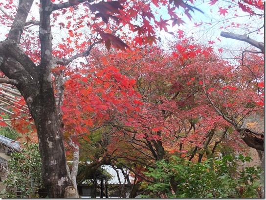 2016京都紅葉 162