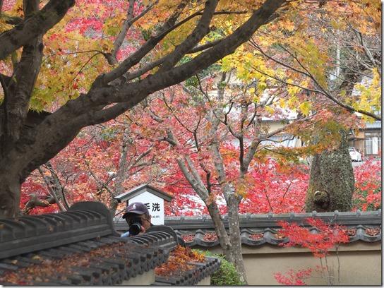 2016京都紅葉 164
