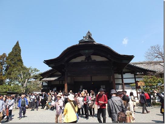 2017京都桜 165