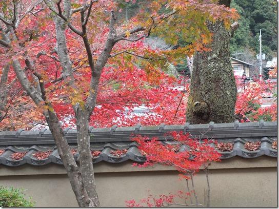 2016京都紅葉 166