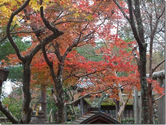 2016京都紅葉 168