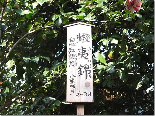2017 関西 梅 169