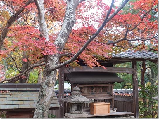 2016京都紅葉 174