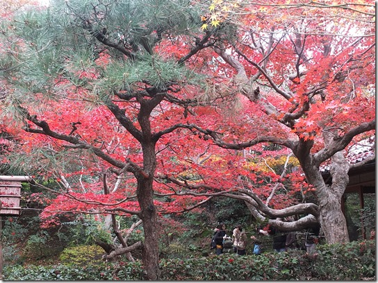 2016京都紅葉 185