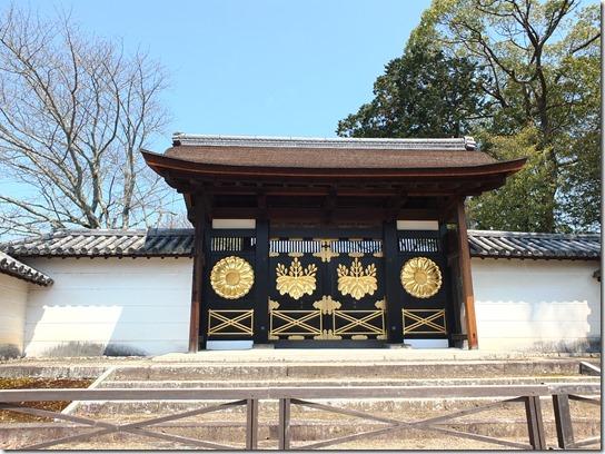 2017京都桜 186