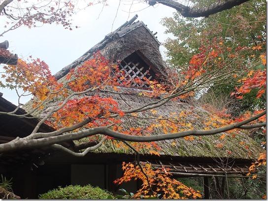 2016京都紅葉 186