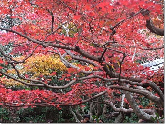 2016京都紅葉 188