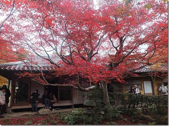 2016京都紅葉 190