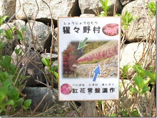 牡丹 関西 2017 190