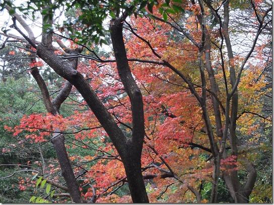 大阪 鎌倉 東京 191