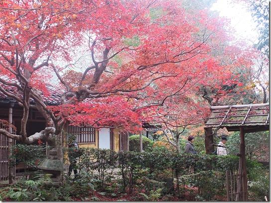 2016京都紅葉 193