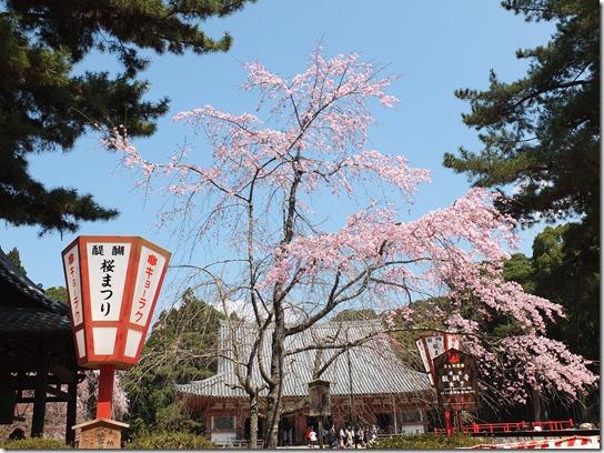 2017京都桜 195