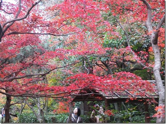2016京都紅葉 196