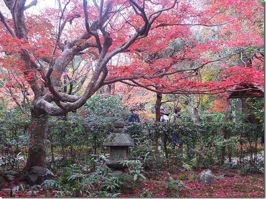 2016京都紅葉 197