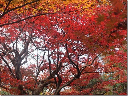 2016京都紅葉 198